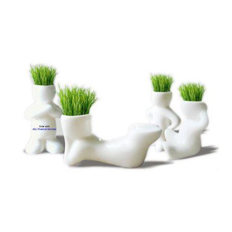 2806 Hair Plant